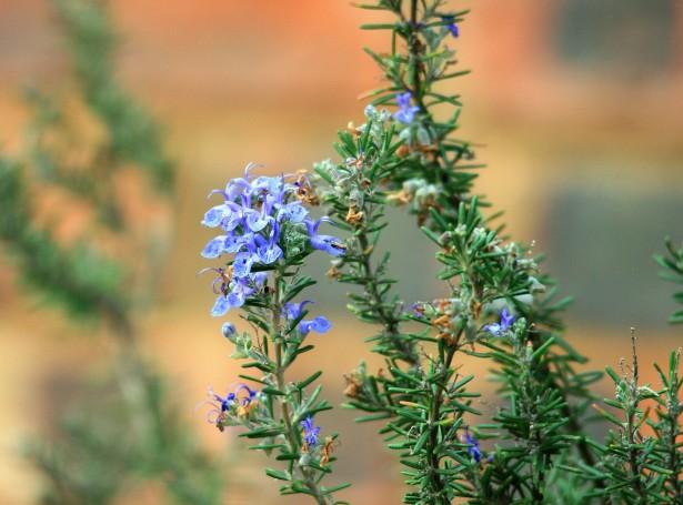romero quercus jardiners jardin mediterraneo